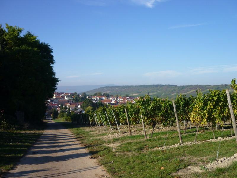 Blick über Appenheim 1