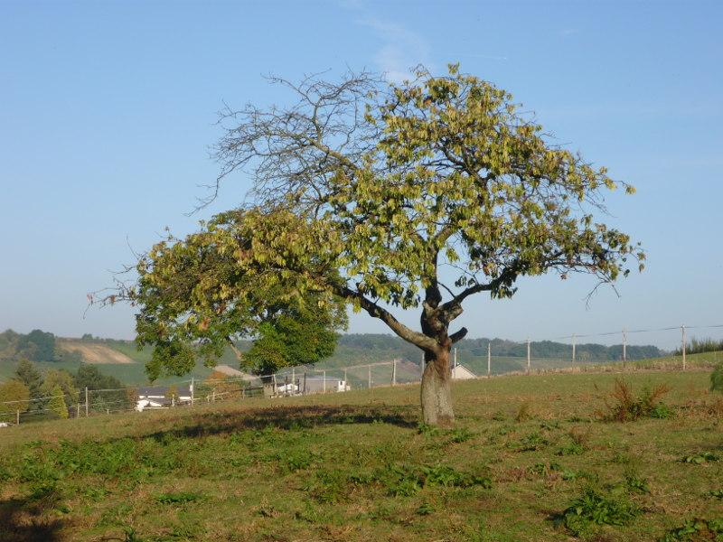 Weide Ortsrand Appenheim