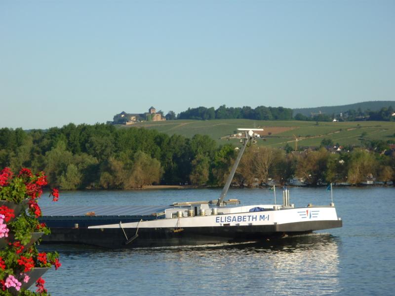 Sapziergang am Rhein bei Ingelheim 1