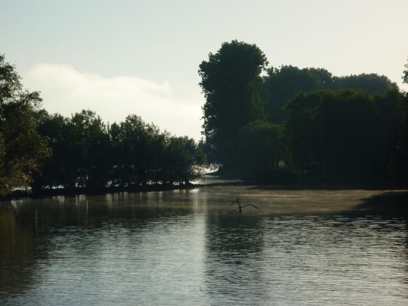 Sapziergang am Rhein bei Ingelheim 2